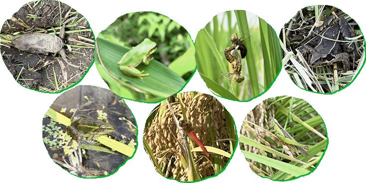 雑草や虫たちを敵にしない有機農業